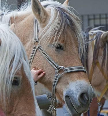 Promenades à poney à La Roche-Posay