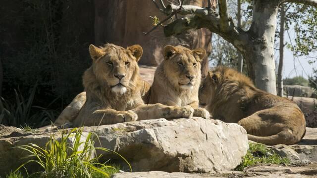 Parcs animaliers près de La Roche-Posay ©ZooParc de Beauval